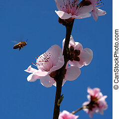 bee and flower - bee and pink flower