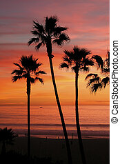 Palm Trees at Sunset - Palm Trees, Manhattan Beach at Sunset