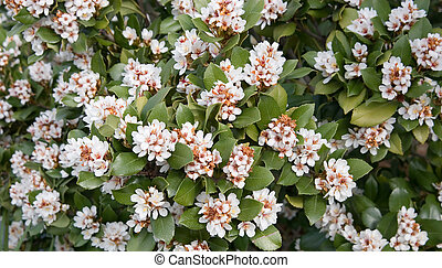 Flowering Bush - A green leafed flowering bush