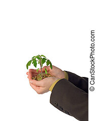 Emerging small business - Hand holding plant sprouting from...