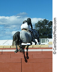 Over The Top - A grey horse going over the top of a large...