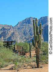 Superstition Mountains - Saguaro cactus and abandoned gold...