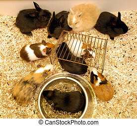 littles bunnies - guinea pigs and bunnies