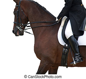Dressage horse - A close up head shot of a horse in a...