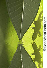 Jungle Scene - Gecko silhouette on green leaves with water...
