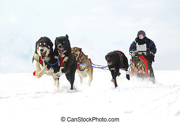 going full blast - taken at warren ontario dog sled races
