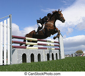 Show Jumper - A horse clearing a jump. Taken at the Horse of...