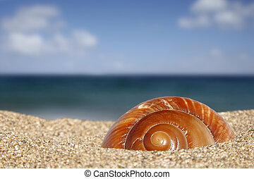 Beach Snail - Close up of conch on sandy beach with sky...