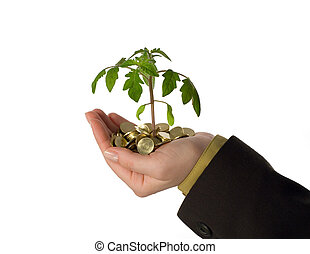 Fostering a business idea - New plant sprouting from a...