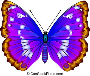 Butterfly - Tropical butterfly