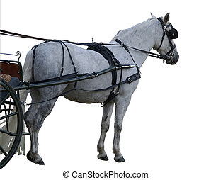 Carriage Pon - A white pony harnessed to a buggyPic is...