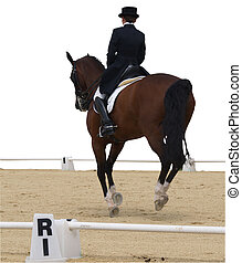 Dressage Competitor - A horse in a dressage competition....