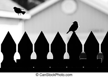 One Flew Away - Silhouette of 2 birds on fence