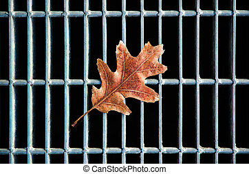 Change of Seasons - An oak leaf on a city street grate.