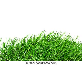 Irish Moss - green Irish Moss, carrageen moss, chondrus...