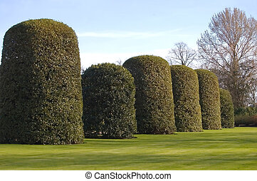 Orangery Hedge - Giant conical hedges at the Orangery,...