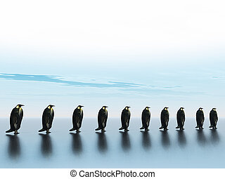 penguins - row of penguins