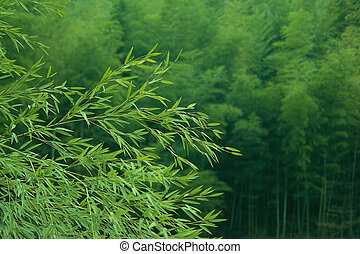 "bamboo - photo in \""home of bamboo\\\"" in pujiang china"