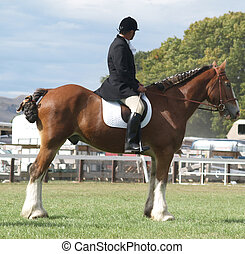 Mounted Clydesdale - A Clydesdale and rider competing in the...
