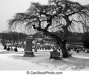 Cemetery Tree - Winter shot of a leafless tree in a...