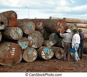 troncos, inspección