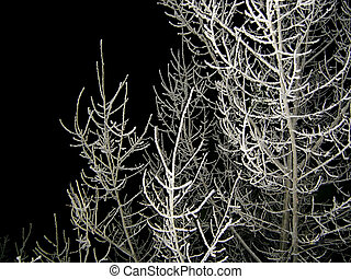 the snow-covered tree at night...