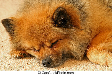 A sad cute sleeping dog - A sad puppy looking cute while...