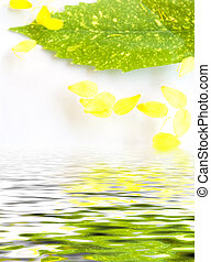 Composition in water - In water yellow petals and a green...