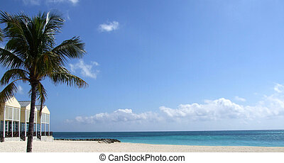 Pristine Beach - Pristine beach scene with a palm tree,...