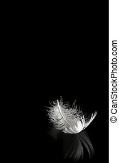 Feather on black - One white feather on a black background