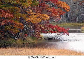 Rivers Fall Colours - Lower South River, Antigonish County,...