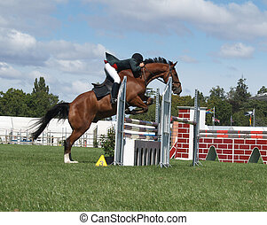 Chestnut Jumper - A horse clearing a jump at the Horse of...