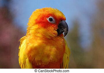 Yellow Parrot Portrait