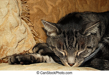 Cat Nap - Content cat relaxing on a sofa, resting and taking...
