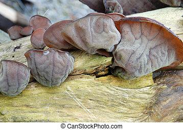 tree fungus on broken branch