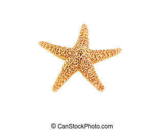 Starfish - Photo of a starfish isolated on white