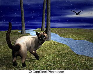 Cat looking over shoulder - siamese cat looking over...