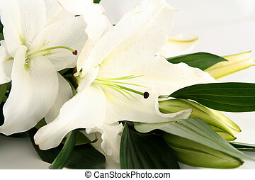 Easter lilies - White easter lilies on a white background