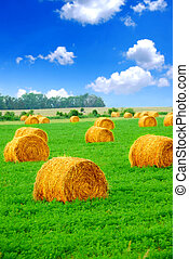 Hay bales - Agricultural landscape of hay bales in a green...