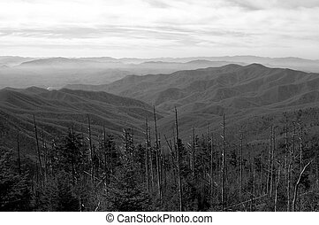 Clingmans Dome View - View from atop Clingmans Dome in...