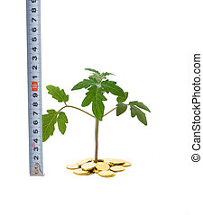 Measuring business growth - Plant sprouting from a pile of...