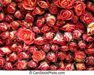 Roses in the flower market Die Rosen auf dem Blumenmarkt