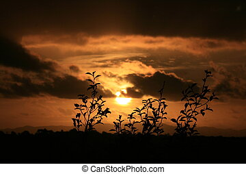 Sunset silhouette of a tree