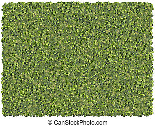 Split peas background. From Food background series