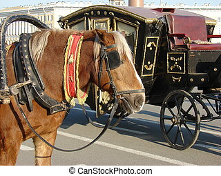 horse & carriage - harnessed horse in a background of an...