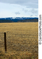Yellow Field - Small clouds hang low over yellow stubble in...