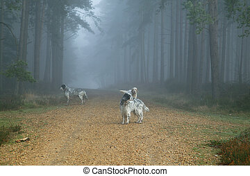 Dogs in fogy forest - Bramshill Forest near Crowthorne in...