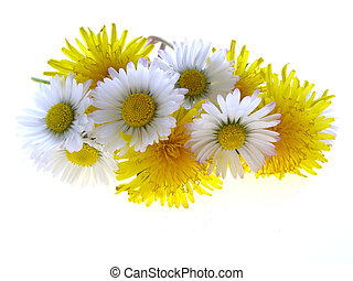 spring daisies and dandelions - Bunch of spring daisies and...