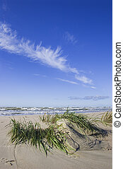 Seagrass after storm - Small dune and Seagrass after storm