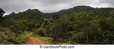 Jungle - Muddy road leading to the jungle. Picture taken in...